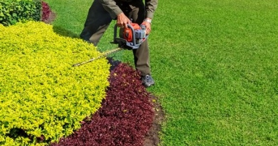 trimming hedges with a trimmer