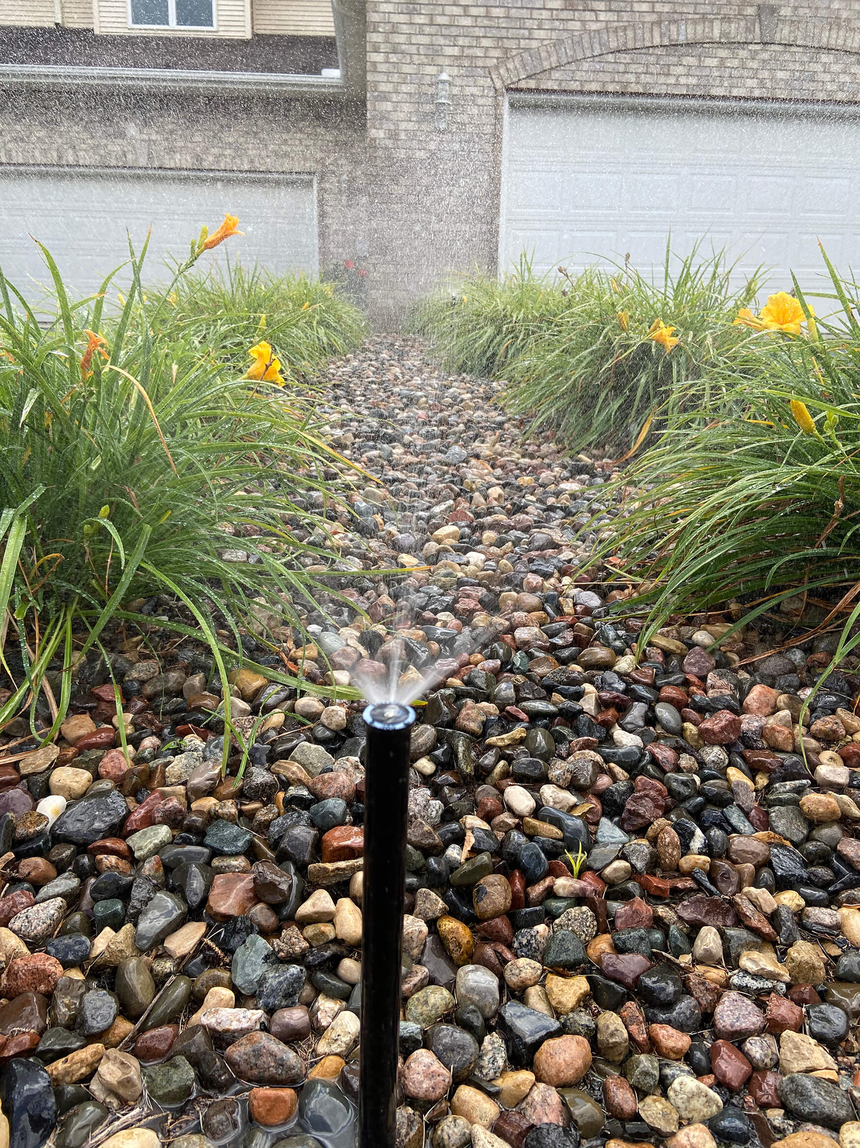 Sprinkler watering yellow flowers
