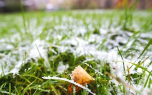 grass covered in frost