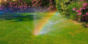 sprinkler in back yard