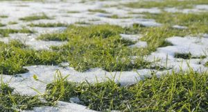grass with ice spots