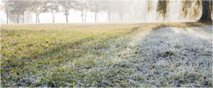 morning frost on grass