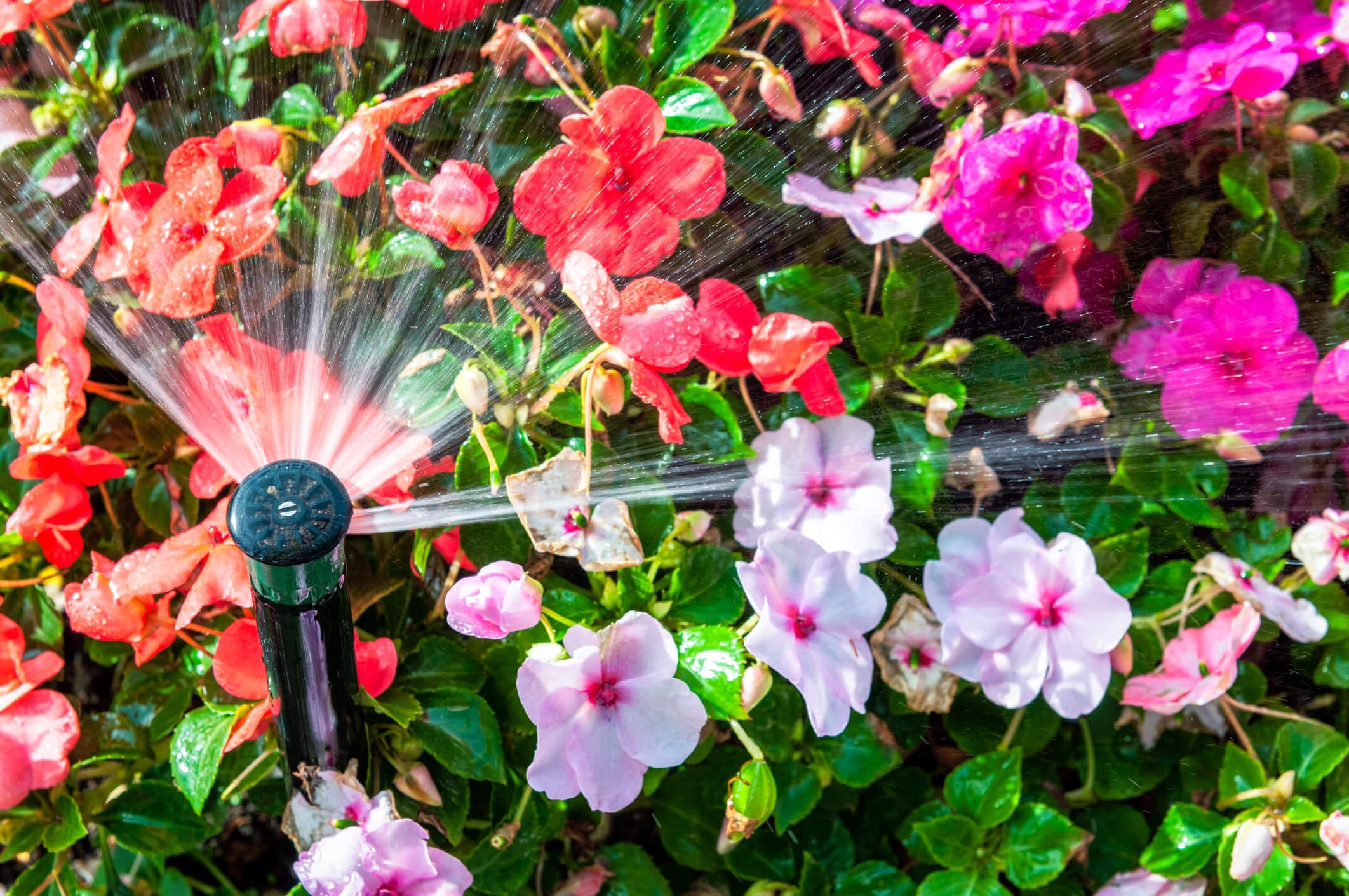 sprinkler watering flowers