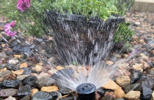 Sprinkler watering purple flowers